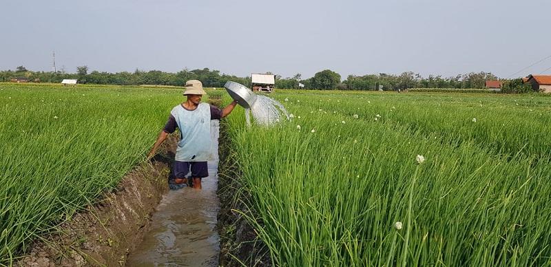 https: img-o.okeinfo.net content 2019 10 11 320 2115744 mentan-ke-milenial-pertanian-kita-sudah-modern-dan-canggih-YIK8Aoxbn2.jpg