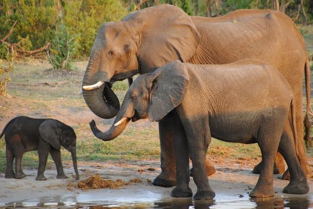 https: img-o.okeinfo.net content 2019 10 23 18 2120912 berlian-dan-gajah-berperan-penting-tentukan-pemenang-pemilu-bostwana-5x0XTADsBL.jpg