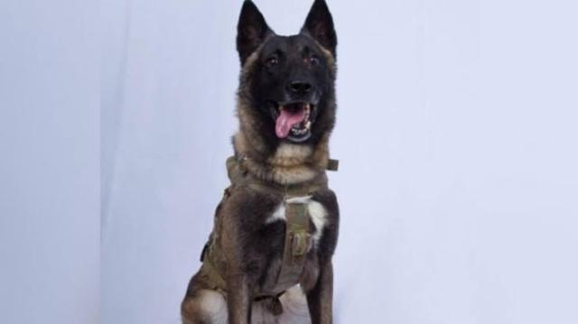 https: img-o.okeinfo.net content 2019 10 29 18 2123139 inilah-anjing-pahlawan-dalam-perburuan-pemimpin-isis-abu-bakr-al-baghdadi-yJhbEKnlAG.jpg