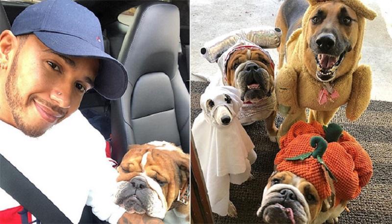 https: img-o.okeinfo.net content 2019 11 06 196 2126420 potret-gemas-juara-dunia-f1-2019-lewis-hamilton-dengan-anjing-peliharaan-6OMKWNkqBx.jpg