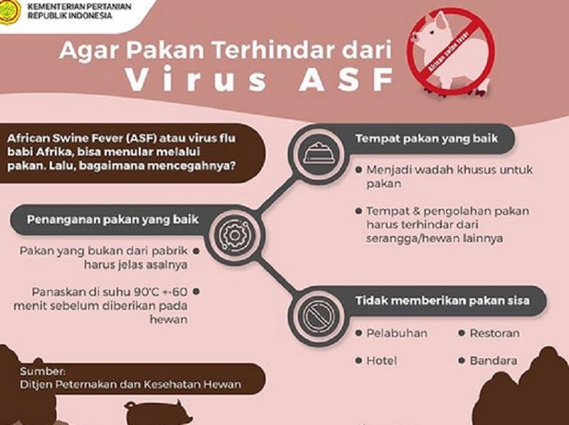 https: img-o.okeinfo.net content 2019 11 13 65 2129472 virus-flu-babi-ternyata-tidak-hanya-terjadi-di-afrika-d9BFJXaeqE.jpg