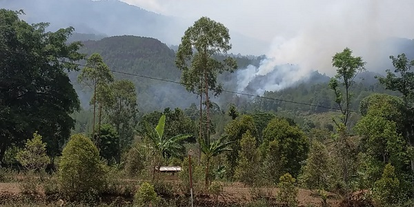 https: img-o.okeinfo.net content 2019 11 17 519 2130928 ini-penyebab-kebakaran-hutan-di-gunung-lawu-sulit-diatasi-prHZhcgEnI.jpg