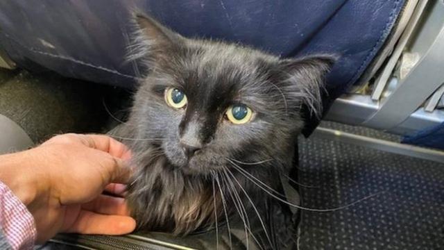 https: img-o.okeinfo.net content 2019 11 21 18 2132736 hilang-5-tahun-kucing-ini-ditemukan-1-900-km-dari-rumahnya-9LMs5eFbKI.jpg