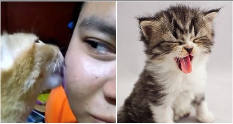 https: img-o.okeinfo.net content 2019 11 26 611 2134635 tak-perlu-skincare-mahal-gadis-ini-atasi-jerawat-dengan-jilatan-kucing-QgSAOB2Sod.jpg