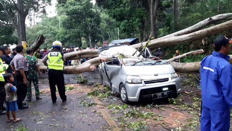 https: img-o.okeinfo.net content 2019 12 22 525 2144766 ditimpa-pohon-tumbang-mobil-hancur-dan-2-orang-terluka-di-cianjur-4nHAOWOya8.jpg