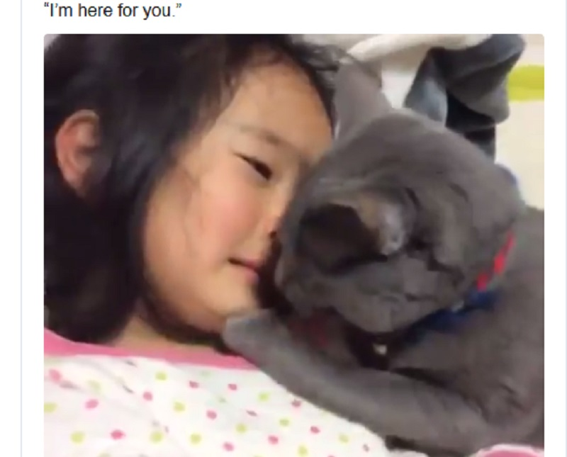 https: img-o.okeinfo.net content 2020 01 06 196 2149814 menenangkan-majikannya-yang-lagi-nangis-tingkah-kucing-ini-viral-di-medsos-9MmqvqDMo2.jpg