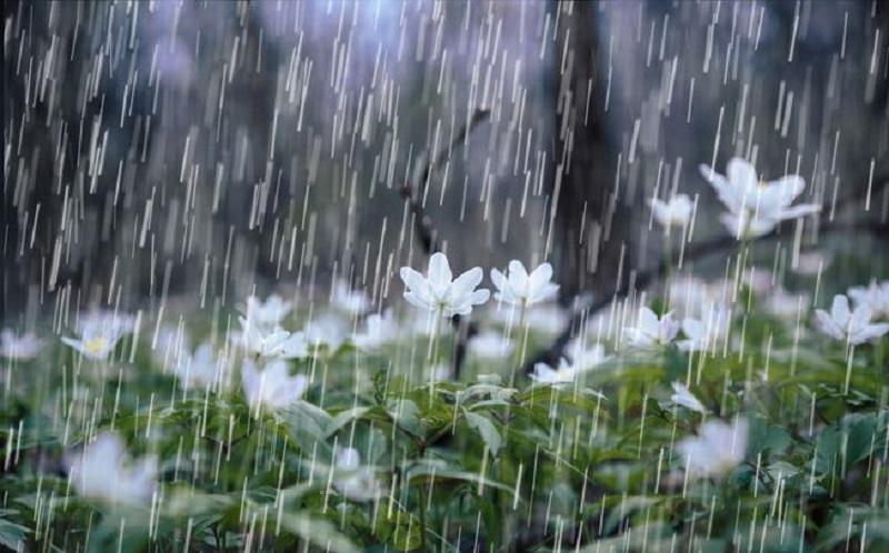 https: img-o.okeinfo.net content 2020 02 26 481 2174347 musim-hujan-usir-flu-dengan-ramuan-alami-jahe-ini-t0BG61aDfx.jpg
