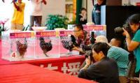 Kontes Kecantikan Ayam Ada di China