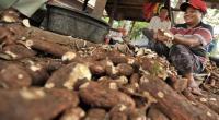 BUSINESS HITS: Yuk Dagang <i>Stick</i> Singkok kalau Anda Bosan <i>Stick</i> Kentang