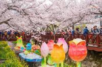 Tak Hanya Jepang, Kamu Juga Bisa Menikmati Bunga Sakura di Korea Selatan