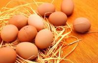 Sederet Mitos & Fakta seputar Telur Ayam, Sepele tapi Perlu Anda Tahu