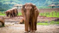 Elephant Nature Park, Wisata Seru Memandikan Gajah