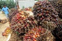 Uni Eropa Stop Gunakan Sawit, Ini Dampaknya ke Perdagangan Indonesia