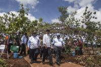 Langkah Jokowi Jaga Hutan Indonesia Diapresiasi Dunia