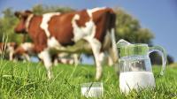 Yakin Susu Cair di Rumah Segar dan Berkualitas Baik? Coba Lakukan Tes Sederhana Ini!