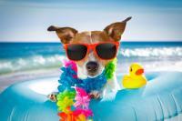 6 Tips Penting Ajak Anjing Berlibur ke Pantai, Jangan Lupa Kantong Kosong