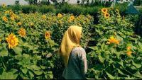 Cantiknya Spot Selfie Bunga Matahari di Boyolali