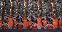 Ini Tari Ratoh Jaroe yang Bikin Upacara Pembukaan Asian Games 2018 Makin Meriah
