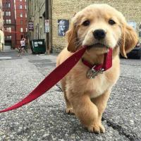 5 Karakter Anjing yang Wajib Dicontoh Manusia