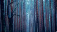 Tambang Tua di Amerika Diubah Jadi Hutan Pengisap Karbon