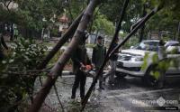 Antisipasi Musim Hujan, Pemprov DKI Tebang 57 Ribu Pohon