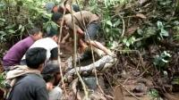 Niat Cari Belut, Warga Temukan Ular 7 Meter yang Awalnya Dikira Batang Pohon