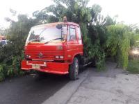 Pohon Tumbang Timpa Truk di Jalur Pantura Semarang, Lalu Lintas Macet