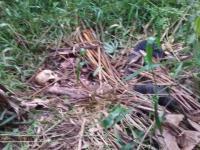 Tengkorak Ditemukan di Pinggir Sungai Cidurian, Polisi Akan Tes DNA Orang yang <i>Ngaku</i> Keluarganya