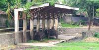 Jati Mati, Gajah di Solo Zoo Kini Tinggal Dian dan Manohara