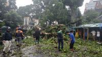 Pohon Bertumbangan di Malang, Pasutri Tertimpa hingga Luka Parah
