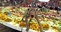 Bayi 40 Hari Diserang Monyet Liar hingga Luka Parah