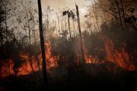Brasil Kerahkan Pasukan Padamkan Kebakaran Hutan Amazon