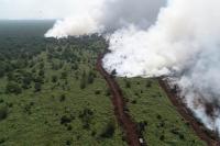 281 Titik Api Terpantau di Sumsel, Status Udara Sempat 'Berbahaya'