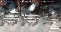 Viral Kucing Mati Diduga Dikasih Ciu, Ini Klarifikasinya