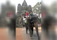 Kamboja Akan Larang Atraksi Tunggang Gajah di Angkor Wat Mulai 2020