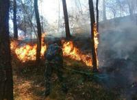 Kebakaran di Gunung Lawu, Ribuan Orang Dilibatkan untuk Padamkan Api