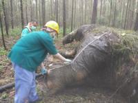 Gajah Sumatera Dibunuh Pemburu, Gading Hilang Dipotong
