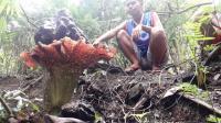 Bunga Bangkai Ukuran Jumbo Mekar di Lereng Bukit Sulap