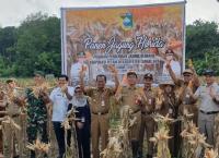 Kementan Terus Kembangkan Korporasi Jagung untuk Kemandirian Petani