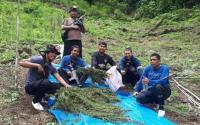 Polisi Musnahkan 5 Hektare Ladang Ganja di Mandailing Natal