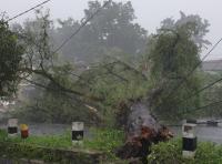 Hujan Deras Guyur Yogyakarta, Puluhan Pohon Tumbang