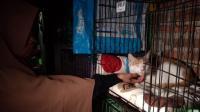 Kesal Ayamnya Mati, Pria di Cirebon Tembak Mata Kucing hingga Buta