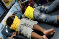 2 Bocah Diserang Tawon Vespa, Sarangnya Seukuran Galon Air