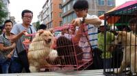 Dampak Virus Corona, Kota Shenzhen China Larang Warga Makan Anjing dan Kucing