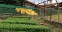 Liga 1 2020 Ditangguhkan, Kandang PSM Beralih Fungsi Jadi Kebun Sayur