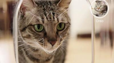 Bistro, Aplikasi Ini Cocok untuk Para Pecinta Kucing
