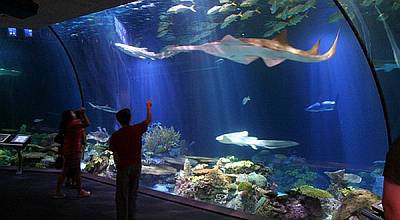 Sea World: Mediasi dengan Ancol Tak Ada Titik Temu