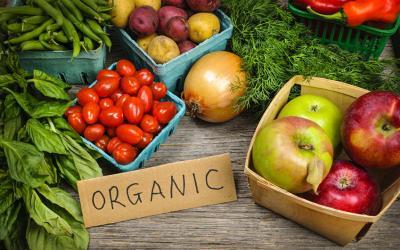 5 Trik Sukses Bisnis Sayur Organik, Nomor 2 Jangan Sepelekan