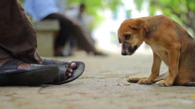 Brown Murung Ditinggal Majikannya yang Dibunuh, Benarkah Anjing Bisa Depresi?