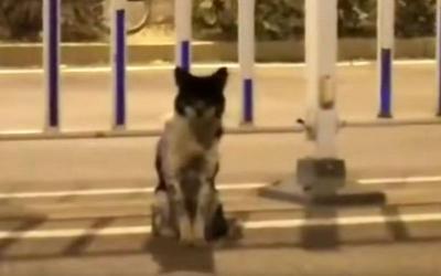 Anjing Ini Setia Menunggu sang Pemilik yang Tewas di Jalan
